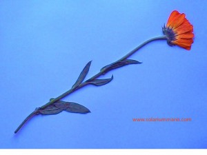 Anekdoten aus meinem Leben - Eine Blume für meine Freundin