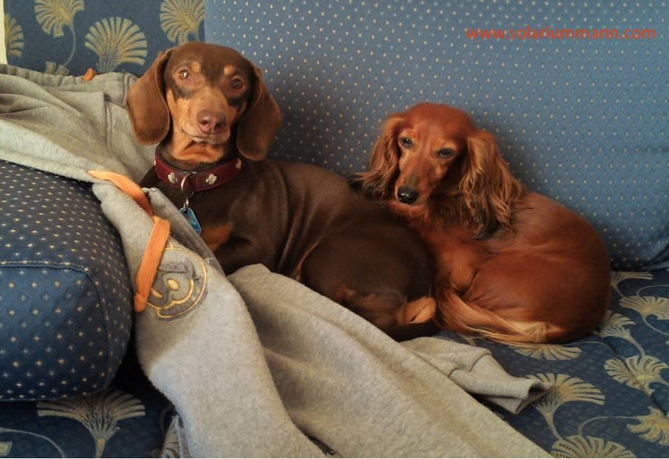 Auf Herrchens Jacke kuschelt es sich am besten, außerdem hat man vom Sofa aus einen besseren Überblick.